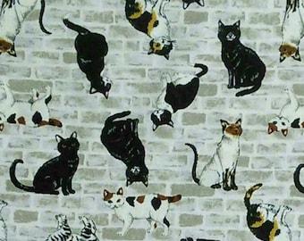 Cat, brick, ivory background, SEVENBERRY