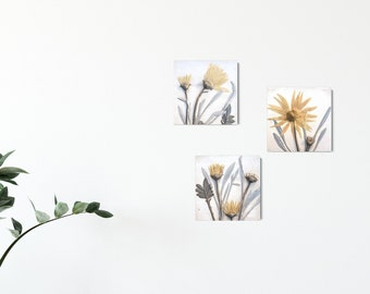 Set of 3 African Daisy Plaster Cast Tiles, botanical bas-relief.