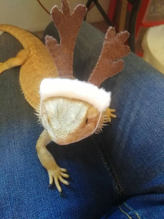 READY TO SHIP!...Christmas Beardie Bowls...High qualityBearded dragonReptileSmall animal