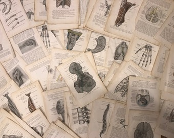 Vintage Anatomy Reference Book Pages 20+ pages!