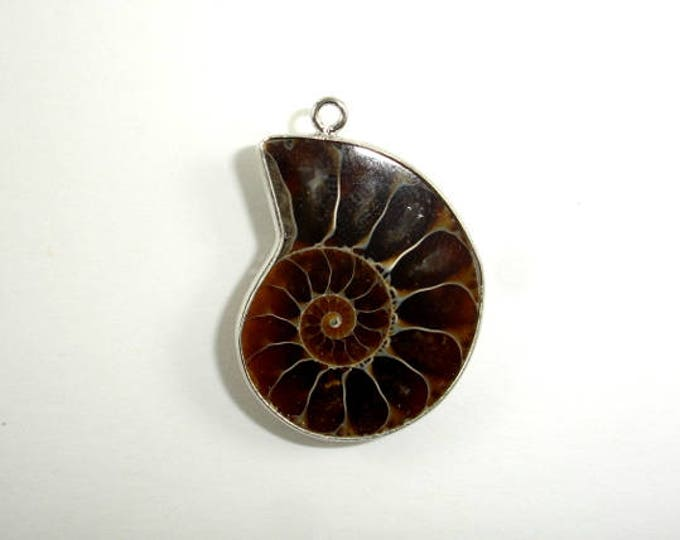 Ammonite Pendant, Fossil Pendant,  with Silver Tone Base Metal Bail, Size from 22x28 mm to 25x32 mm, 1 piece (108049001)