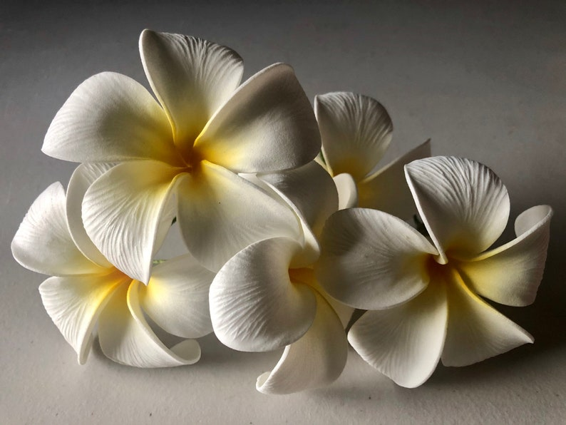 White Textured Plumeria