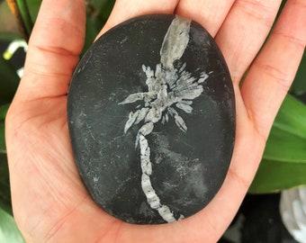 Chrysanthemum Stone Crystal w/ Free Shipping