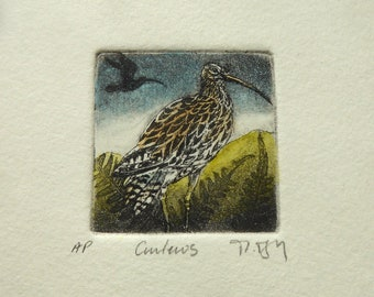 Curlews. An original mini etching by Moira McTague