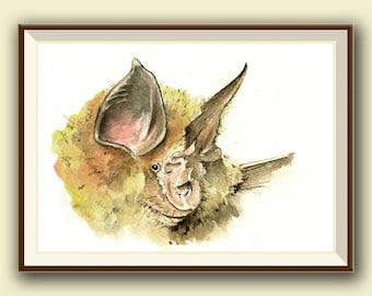 Mittelmeer Hufeisennase (Rhinolophus Euryale) Bat   Fledermaus Kunst    Original Aquarell Malerei Juan Bosco