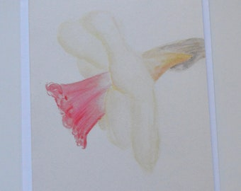 Daffodil Watercolor, Pencil and Pastel Notecard (single card)