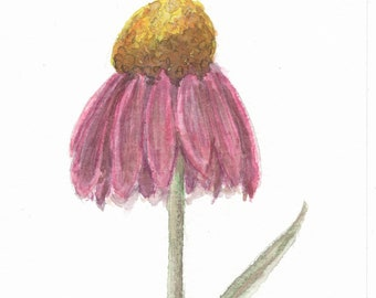 Watercolor + Pastel Cone Flower Notecards - Set of 4 Cone Flower Notecards with Envelopes