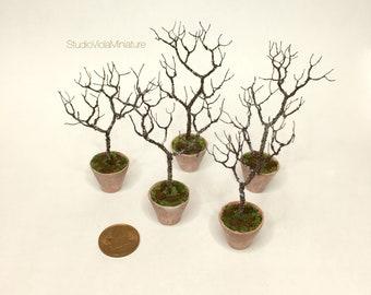Tree sapling - 1/12 scale model