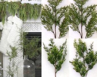 Cedar Spray Cedar Stems