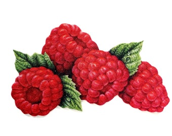 Red Current Berry Postcard Gift Tags or Scrapbook Tags or Magnet #711