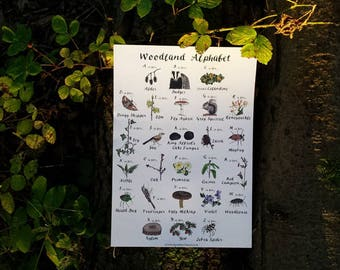 Woodland Alphabet art print (A4 or A3) by Alice Draws The Line, featuring forest flora and fauna illustrations. Alphabet poster