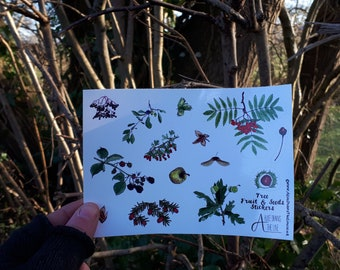 Autumnal fruit and seeds sticker sheets by Alice Draws The Line; great for children's birthday party bags.A6 sheets of woodland & tree seeds