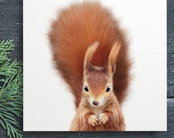 Red squirrel print, PRINTABLE art, The Crown Prints, Baby animal prints, Woodland nursery, Nursery wall art, Kids room decor, Photography
