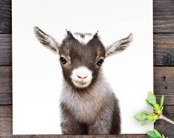 Baby Goat Print, PRINTABLE ART, Farm animal prints, Nursery art, Baby animal prints, The Crown Prints, Nursery animal prints, Baby animals
