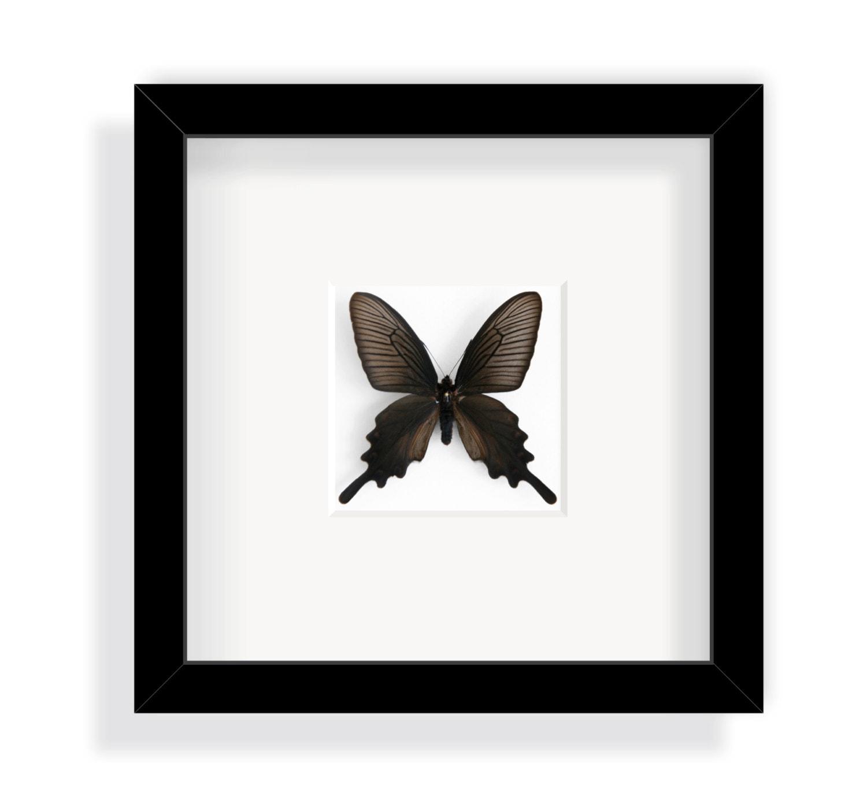 Tolle Wie Ein Schmetterling In Einem Rahmen Zu Erhalten ...