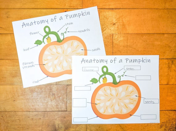 Pumpkin Anatomy Labeling Printable Pumpkin Activity