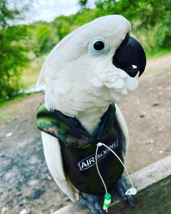 Pet bird parrot 'BIRDY AIRBORNE' hoodie - all sizes available - petite to large