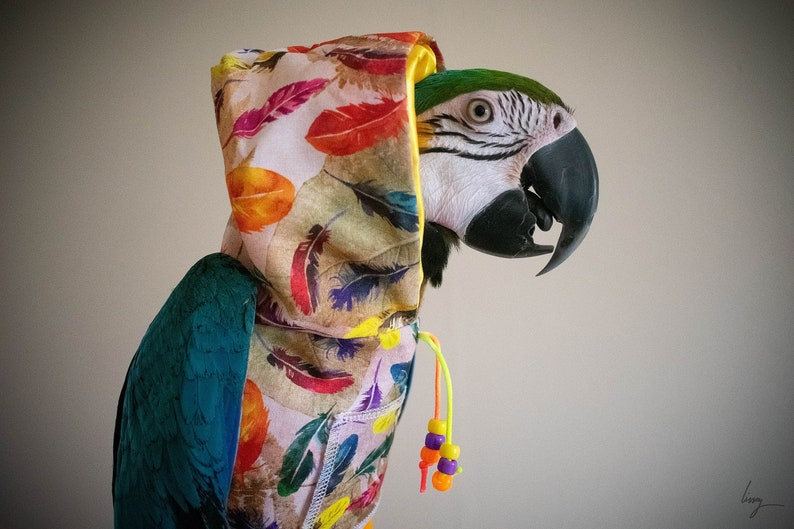 Pet bird parrot fantastical feather hoodie  all sizes image 0