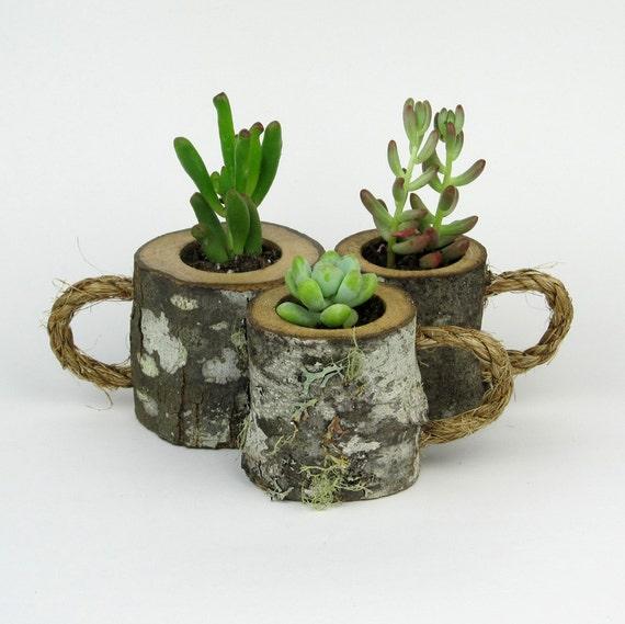 Succulent Planters | 3 Rustic Succulent Planters Coffee Mugs Log Planter Cactus Etsy