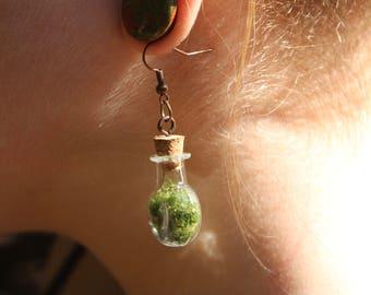 Moss Terrarium Earrings