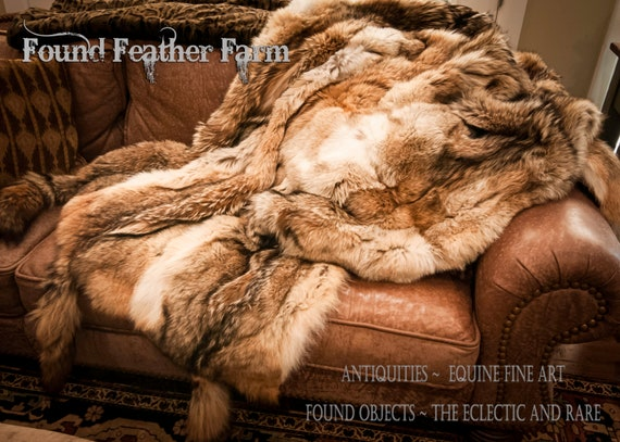 Stunning Genuine Full Size Natural Coyote Fur Throw with Six Coyote Tails and Lined in a Velveteen Fabric