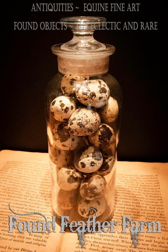 Large  1890's Antique Apothecary Jar with Glass Stopper Filled with Speckled Quail Eggs