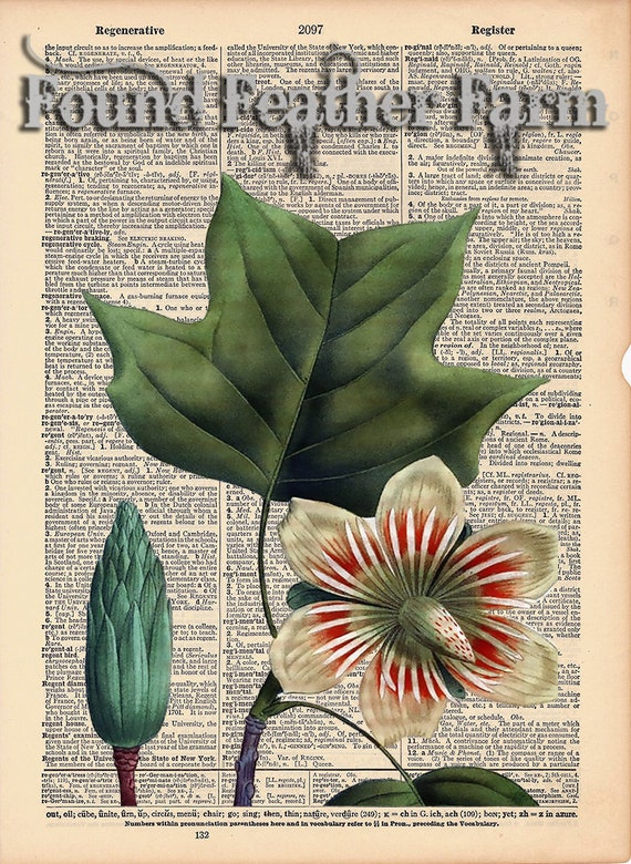 "Vintage Antique Dictionary Page with Antique Print ""Tulip Tree Leaves"""