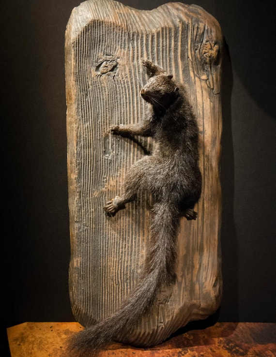 Taxidermy Mount Black Squirrel