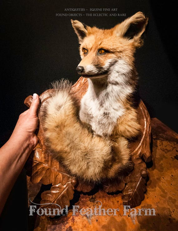 Vintage English Red Fox Taxidermy Mount on a Handcarved Wooden Plaque