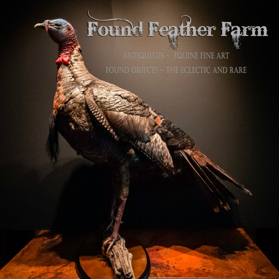 Stunning Male Eastern Turkey Taxidermy Mount