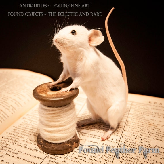 "Darling Taxidermy White Mouse named ""Nibbles"" on a vintage White Thread Spool"