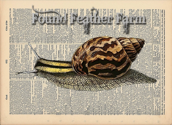 "Vintage Antique Dictionary Page with Antique Print ""Snail"""