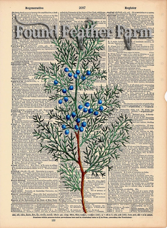 """Vintage Antique Dictionary Page with Antique Print """"Red Cedar Leaves"""""""