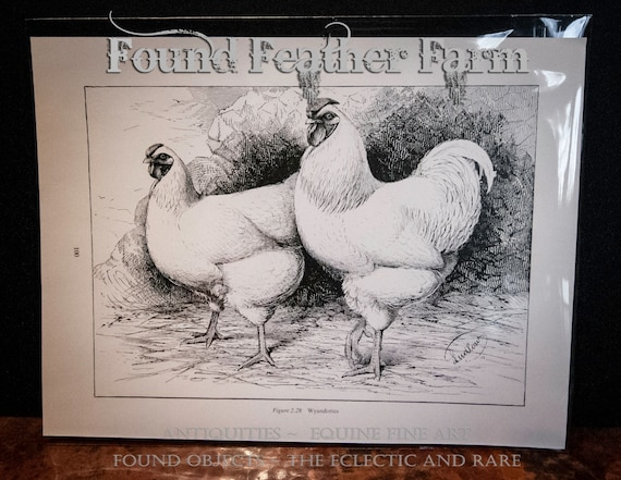 Antique 1910 Lithograph Print of White Wyandottes Chickens