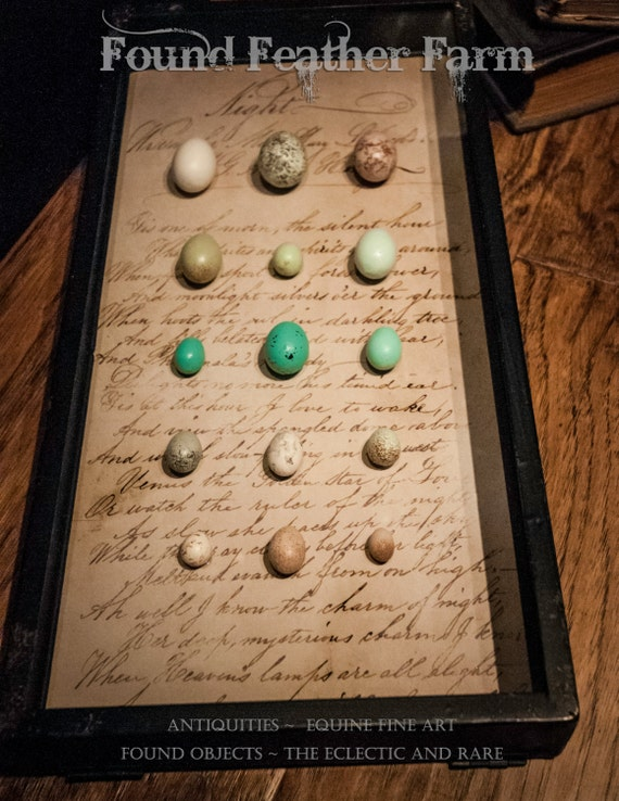 Vintage Shadow Box with Replica Garden Bird Eggs of Great Britain