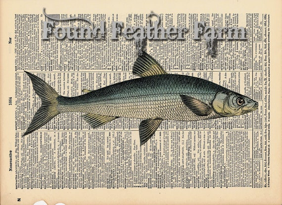 """Vintage Antique Dictionary Page with Antique Print """"Ocean Fish"""""""