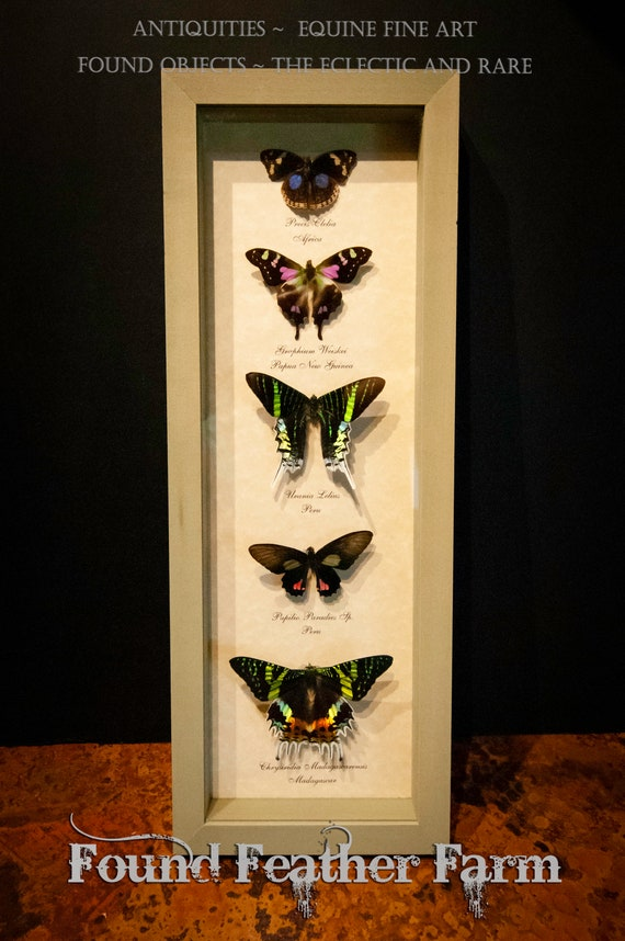 Beautiful Vintage Set of Five Mounted Butterflies in Sage Green Shadowbox Frame