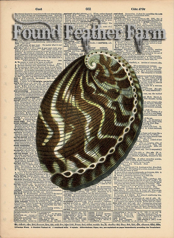 """Vintage Antique Dictionary Page with Antique Print """"Shell Two"""""""