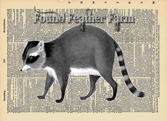 """Vintage Antique Dictionary Page with Antique Print """"Black and White Raccoon"""""""