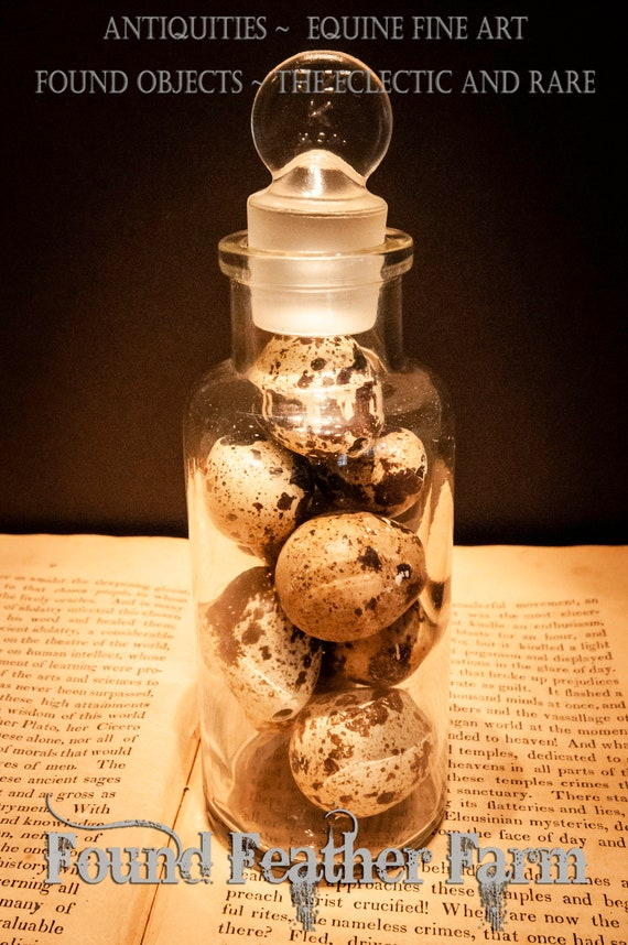 Small 1890's Antique Apothecary Jar with Glass Stopper Filled with Speckled Quail Eggs