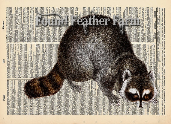 """Vintage Antique Dictionary Page with Antique Print """"Raccoon Etching Horizontal"""""""