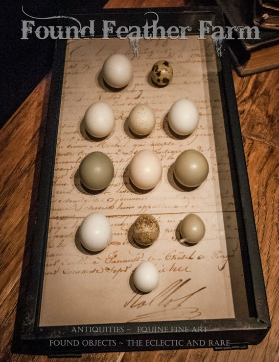 Vintage Shadowbox with Faux Game Bird Eggs of Great Britain