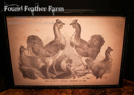 Wood Framed Primitive Poultry Print Giclee on Linen Canvas