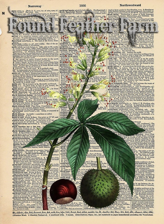 """Vintage Antique Dictionary Page with Antique Print """"Ohio Buckeye Leaves"""""""