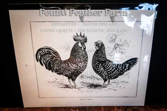 Antique 1910 Lithograph Plate of a Pair of Anconas Hen and Rooster Chickens