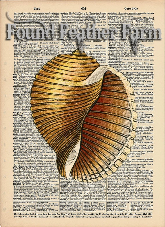 """Vintage Antique Dictionary Page with Antique Print """"Shell Four"""""""