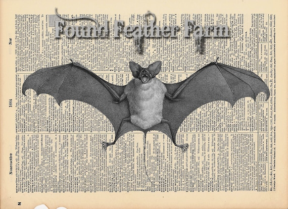 """Vintage Antique Dictionary Page with Antique Print """"Flying Bat"""""""