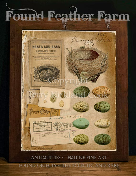"Egg Study ~ Original Vintage Art Collage 20"" x 24"" Framed Giclee Print"