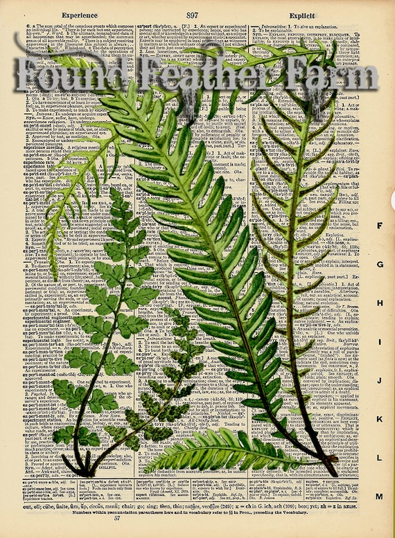 """Vintage Antique Dictionary Page with Antique Print """"Fern Leaves"""""""