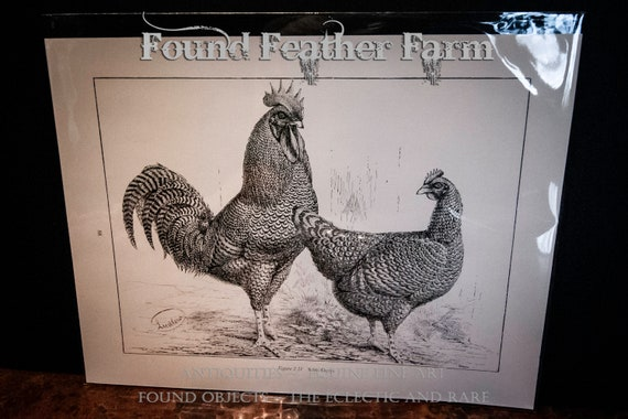 Antique 1910 Lithograph Plate of a Pair of Scots Greys Hen and Rooster Chickens